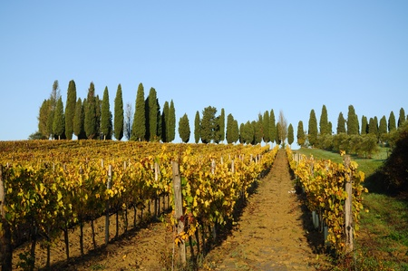 A tipycal autumnal landscape in the Chianti region in Tuscany