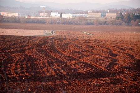 terra: Terra di Siena