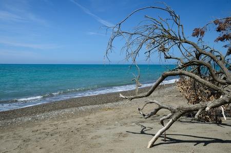 Wild Beach Banco de Imagens