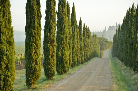 tuscan: A tipycal wooded path in Tuscany