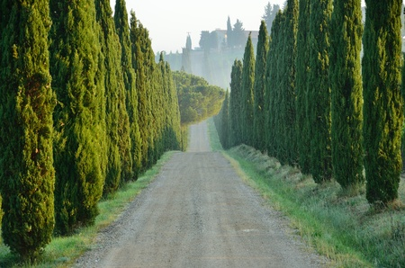 wooded path: A tipycal wooded path in Tuscany