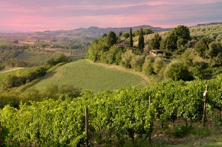 A beautiful sunset in the Tuscan country (Chianti) Stock Photo - 10522763