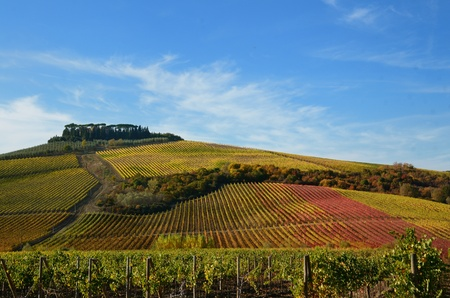 The autumn in the chianti area, in tuscany Stock Photo