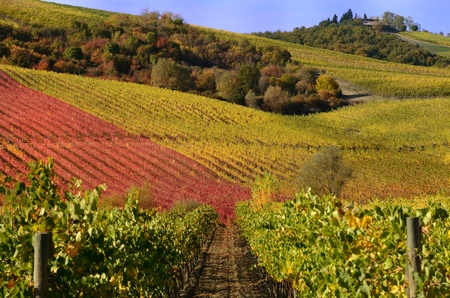 The autumn in the chianti area, in tuscany photo