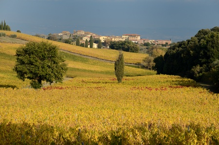 The hills in the chianti regions in tuscany photo