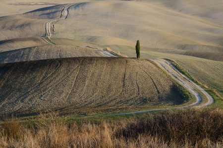 Crete Senesi (Tuscany) photo
