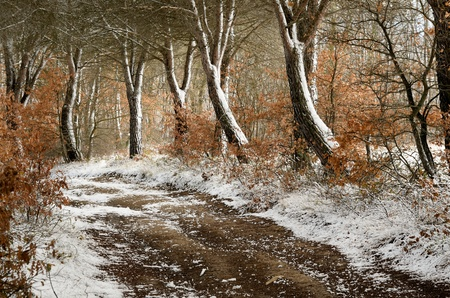 Winter Path photo