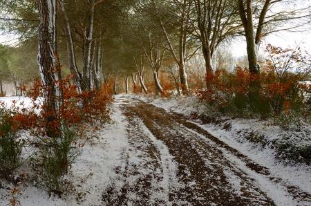 Winter Path photo