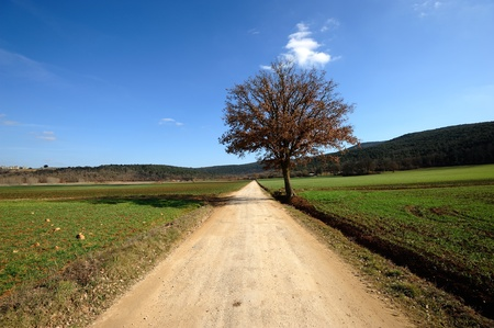 ecodiesel: A lone tree in a green field  Stock Photo