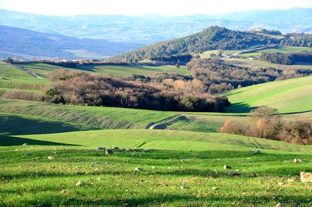 Scenic view of a typical Tuscan landscape Stock Photo - 12849860