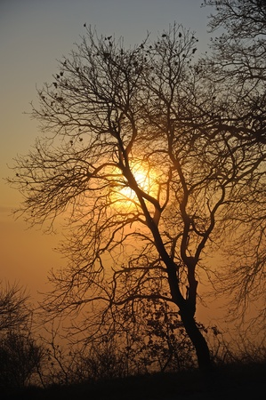 A colored sunrise in a misty morning photo
