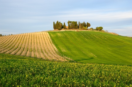 Chianti is one of the most famous rural area of Tuscany photo