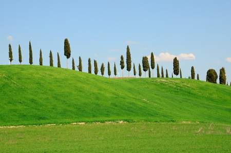 A cypress alley on a hill top in Tuscany, Italy. photo