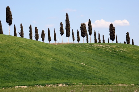 A cypress alley on a hill top in Tuscany, Italy. Stock Photo - 13277980