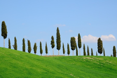 A cypress alley on a hill top in Tuscany, Italy. Stock Photo - 13277810