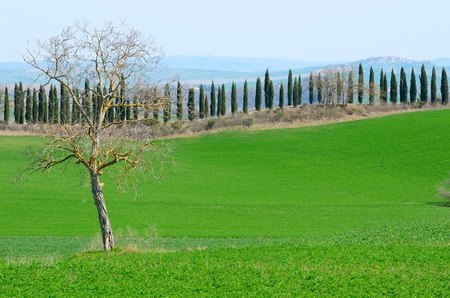 A cypress alley on a hill top in Tuscany, Italy. Stock Photo - 13278089