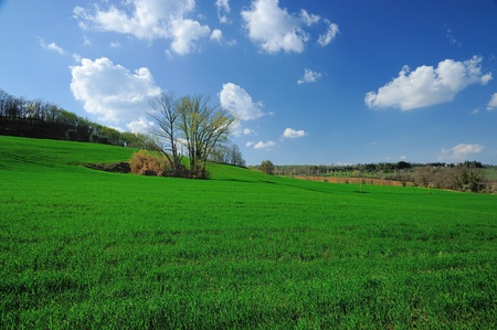 greenfield: A beautiful green field under a blue sky in spring