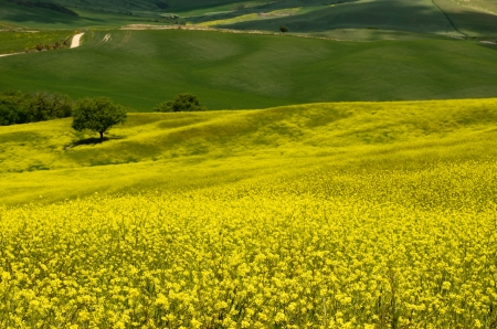 One of the most beautiful country landscape in Tuscany Stock Photo - 13752460