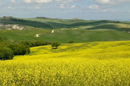 One of the most beautiful country landscape in Tuscany Stock Photo - 13752458
