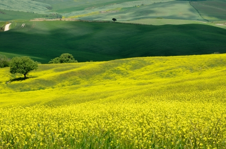 One of the most beautiful country landscape in Tuscany Stock Photo - 13752493