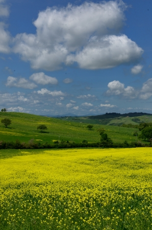 One of the most beautiful country landscape in Tuscany Stock Photo - 13841944
