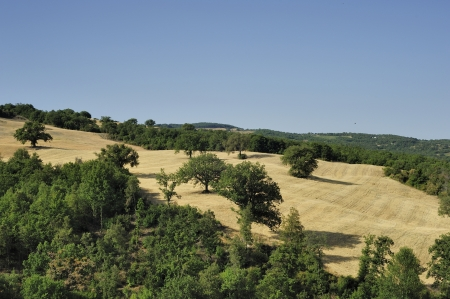 A country landscape in sumer time in  Tuscany photo