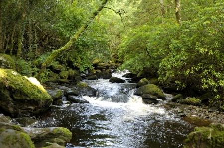 Cascate di Torc Killarney National Park, Contea di Kerry, Irlanda Archivio Fotografico