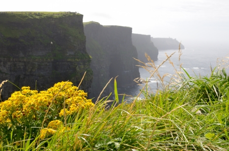 The famous landscape of Cliffs of Moher in Ireland photo