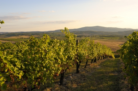 The typical landscape in the tuscan hills of Chianti