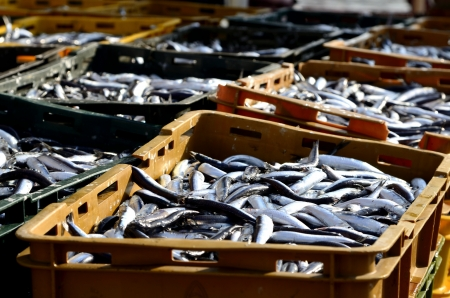 Fresh fish at the port of KRK in the early morning Stock Photo