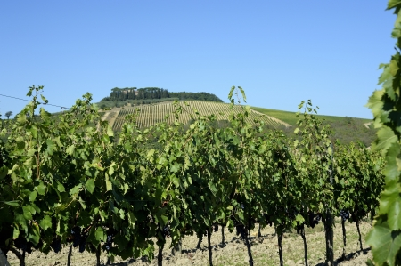 The typical landscape in the tuscan hills of Chianti photo