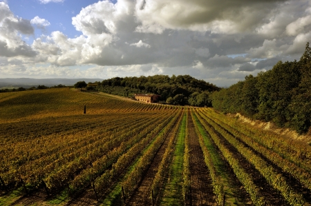 Autum paints the vineyards with yellow and red tones