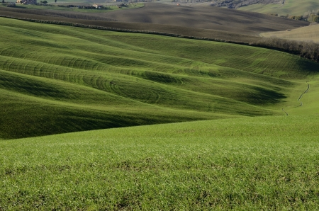 A typical green hillside landsdscape in Tuscany Stock Photo - 17171593