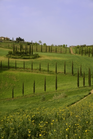 A tipycal landscape in tuscany during spring photo