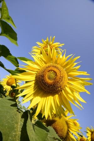I colori caldi dell'estate in Toscana