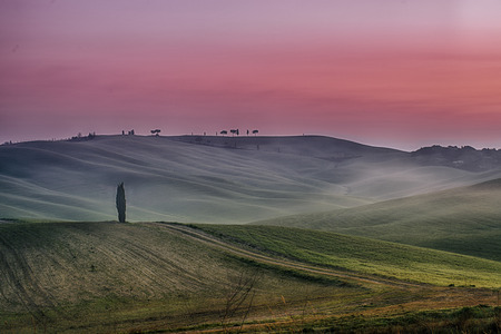agriturismo: Tuscany at early morning with fog and sun