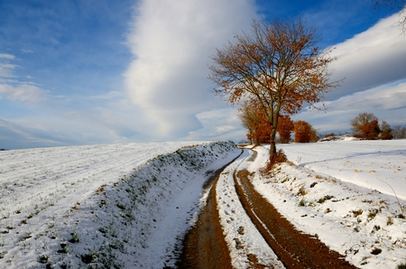 Snowy landscape of a little wood in Tuscany