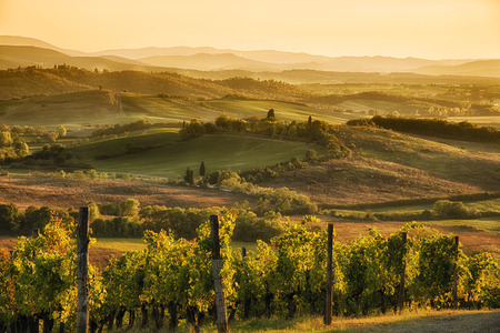 tuscan: A panoramic view over the hills of Chianti at sunset hour Stock Photo