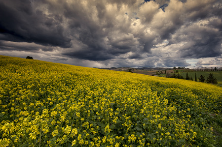 crete senesi: The beautiful colors of the spring in the landscapes of Crete Senesi in Tuscany