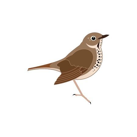 thrush: Stylized brown thrush bird vector illustration isolated on white background.