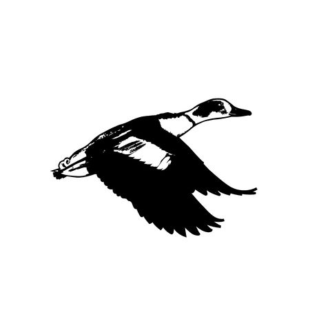 duck silhouette: Flaying duck silhouette vector illustration isolated on white background.