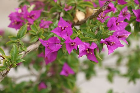 Beautiful purple wlower available in high-resolution and several sizes to fit the needs of your project