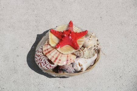 Beautiful sea shell available in high-resolution and several sizes to fit the needs of your project Stock Photo