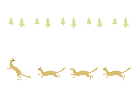 gronostaj: Fir tree and ermine
