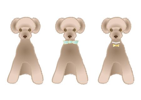 variations: Sitting Brown poodle variations