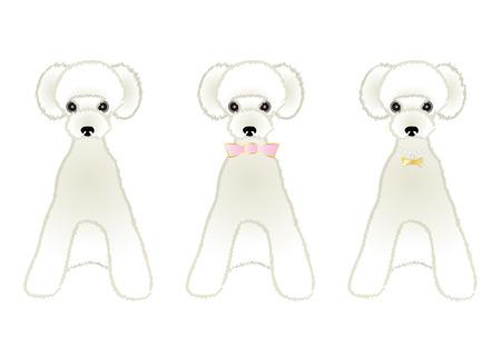 variations: Sitting White poodle variations
