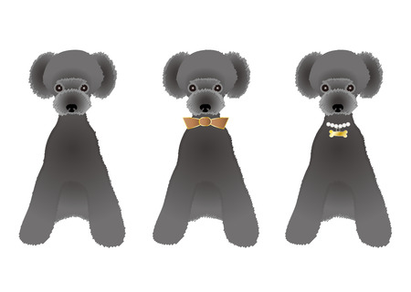 whole body: Sitting Black poodle variations Illustration