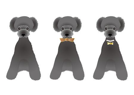 variations: Sitting Black poodle variations Illustration
