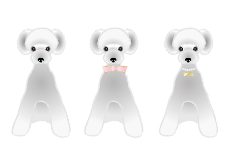 the whole body: Sitting Silver poodle variations Illustration