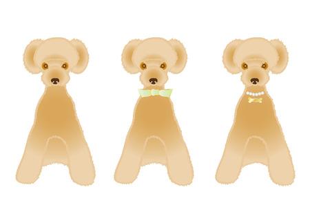 variations: Sitting apricot color poodle variations